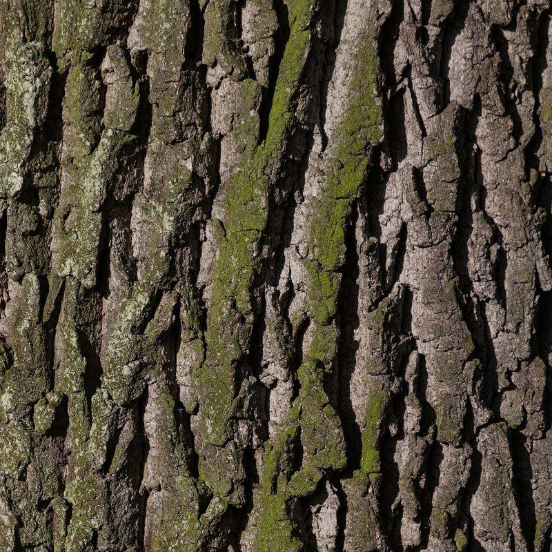 Naturfriseur Pflanzenfarbe Rohstoff Eichenrinde